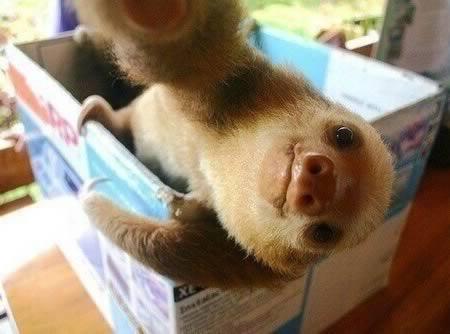 a98636_selfie_5-sloth