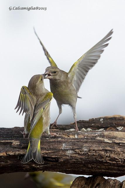 birds-feeding-time