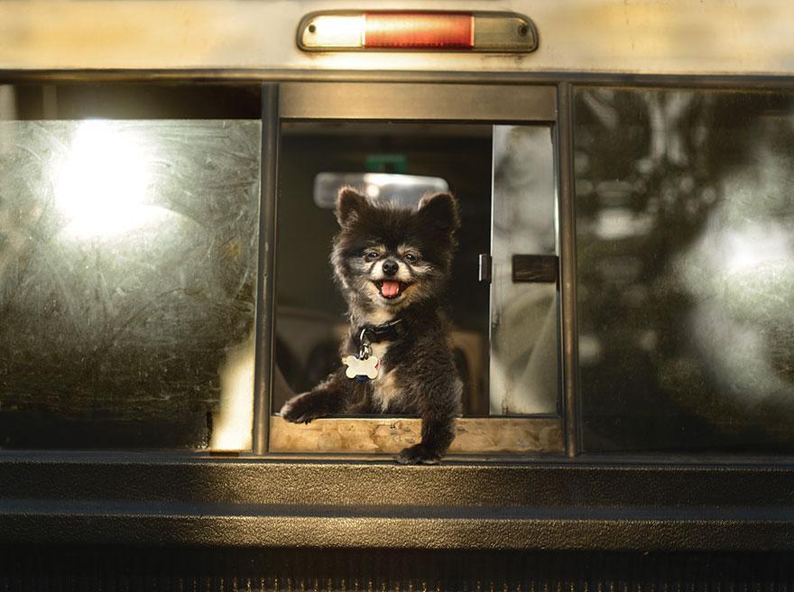 funny-dogs-in-cars-lara-jo-regan-3