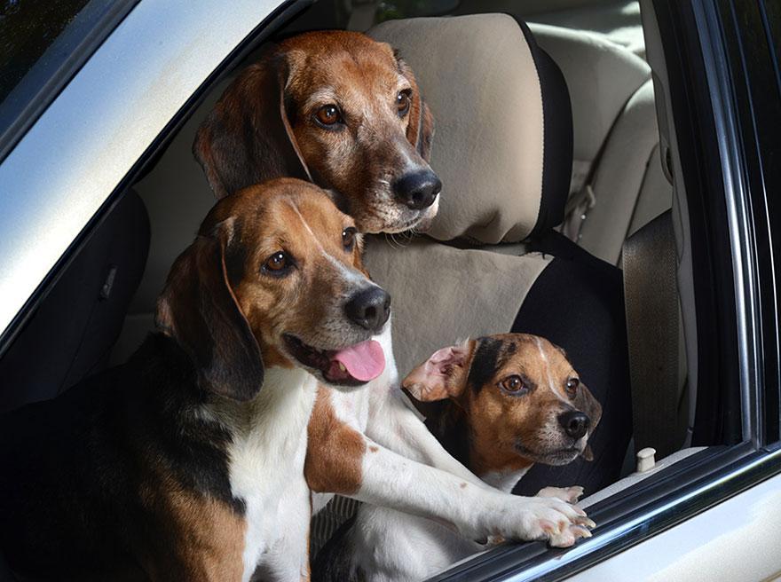 funny-dogs-in-cars-lara-jo-regan-7