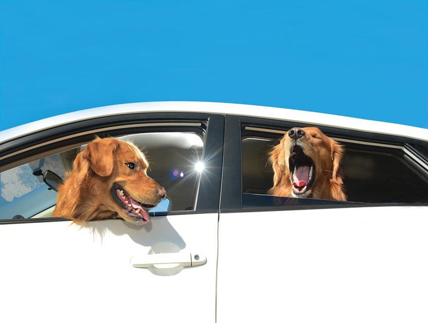 funny-dogs-in-cars-lara-jo-regan-9