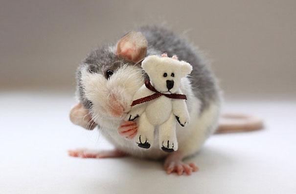 rat15
