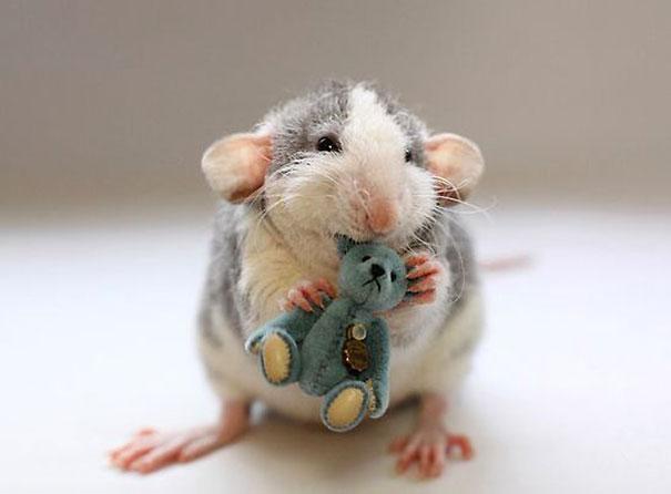 rat17