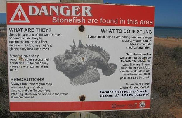 3. Stonefish eða steinfiskur er eitraðasti fiskur í heimi
