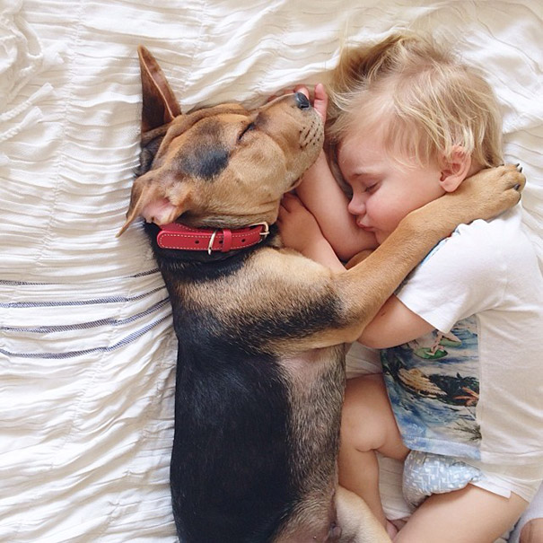 toddler-naps-with-puppy-theo-and-beau-2-8