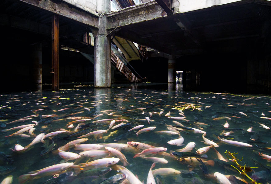 abandoned-shopping-mall-in-bangkok-has-been-taken-over-by-fish-45274