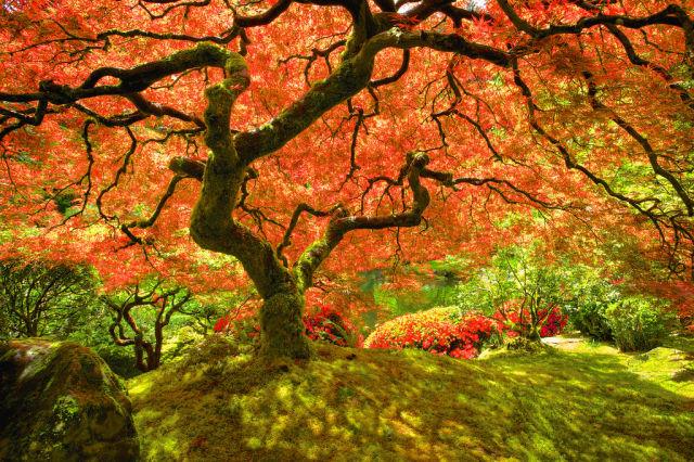 autumn_is_such_a_beautiful_season_640_02