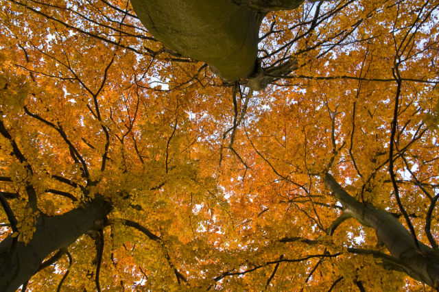 autumn_is_such_a_beautiful_season_640_18