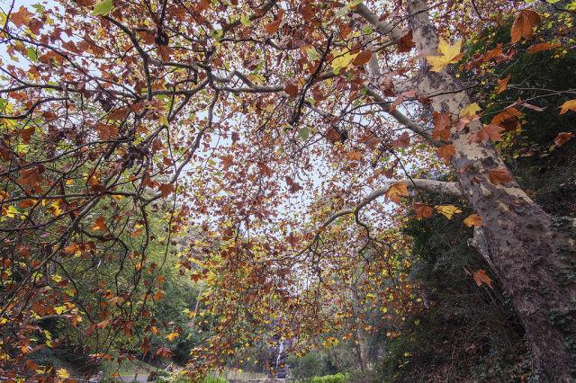 autumn_is_such_a_beautiful_season_640_21