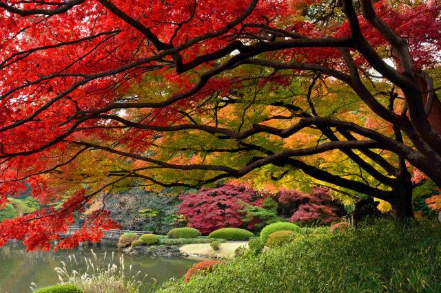 autumn_is_such_a_beautiful_season_640_29