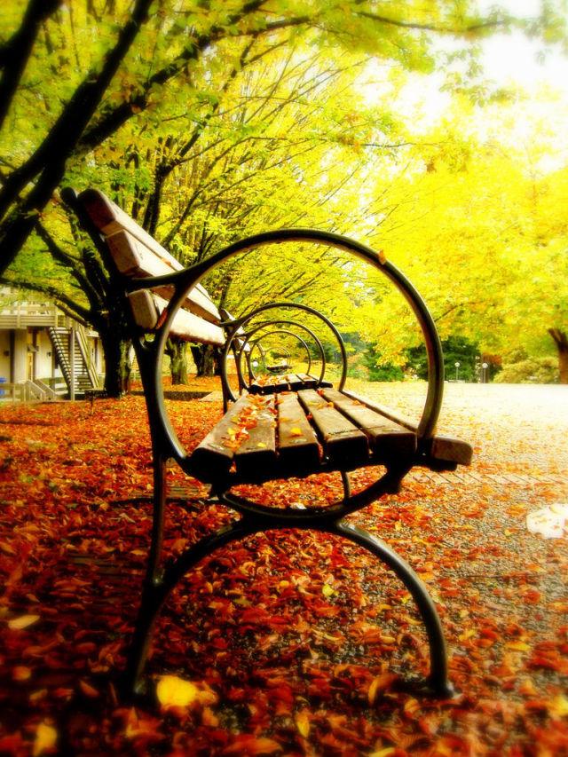 autumn_is_such_a_beautiful_season_640_high_04