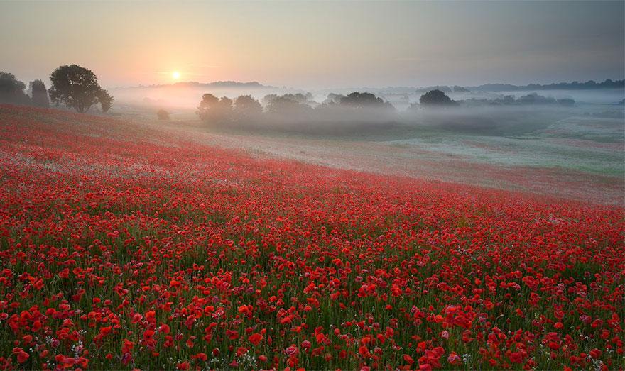 fog-mist-fields-photography-6__880
