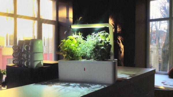 37-smart-herb-garden-no-sun-soil