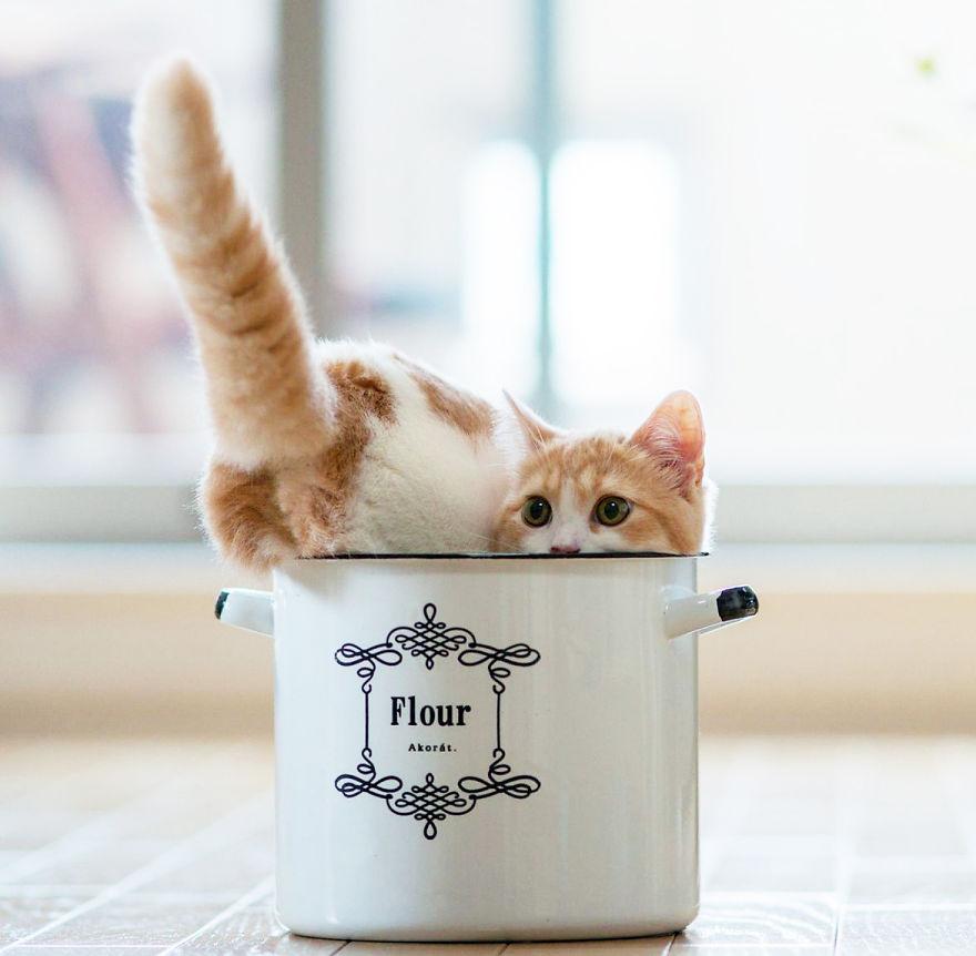 Cat In A Pot