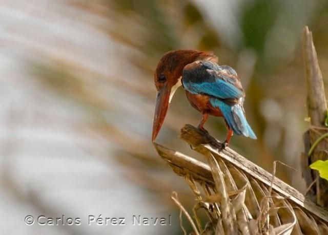 Wildlife-photographer-9yo-wcth04