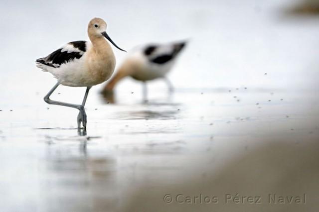 Wildlife-photographer-9yo-wcth07