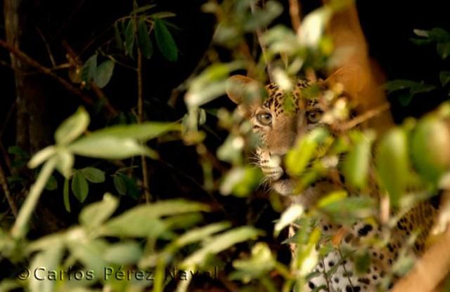 Wildlife-photographer-9yo-wcth08