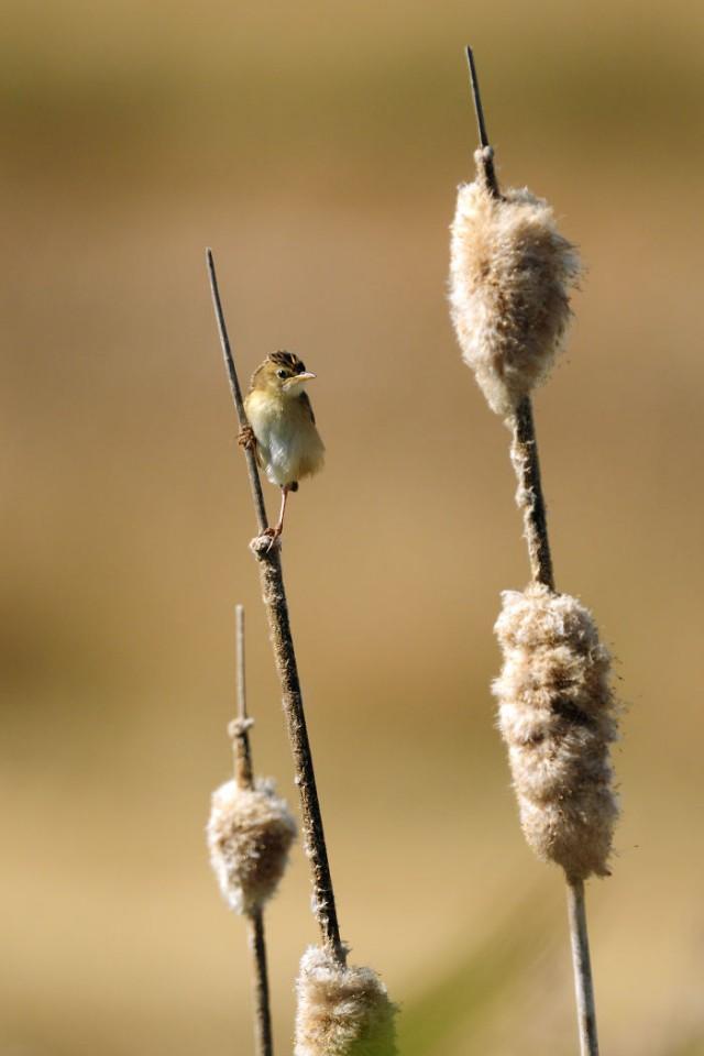 Wildlife-photographer-9yo-wcth10