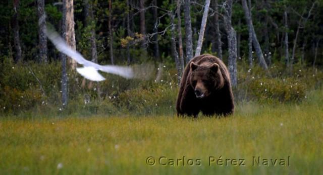 Wildlife-photographer-9yo-wcth12
