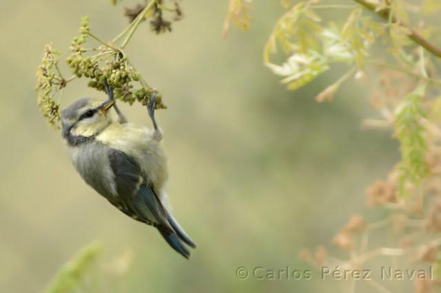 Wildlife-photographer-9yo-wcth14