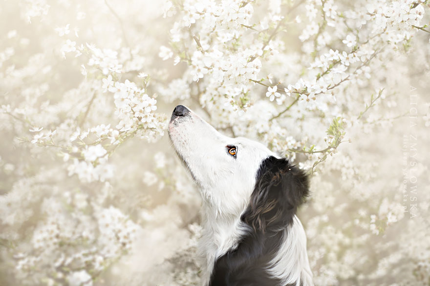 dog-photography-alicja-zmyslowska-19