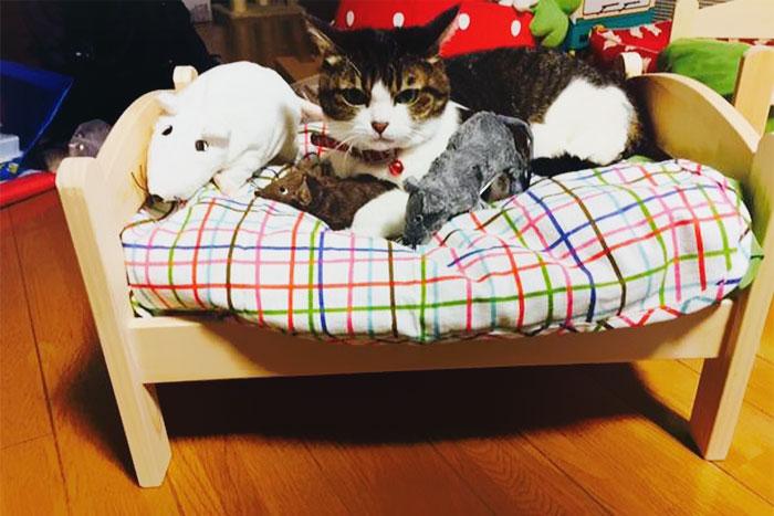 ikea-duktig-bed-hack-cat-bed-4