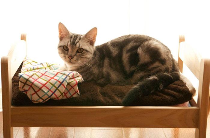 ikea-duktig-bed-hack-cat-bed-9