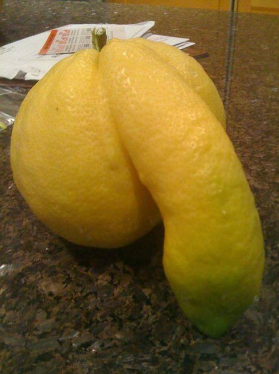 lemon-with-penis