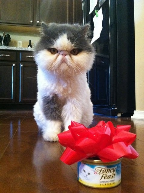 3. This kitty who will not fall for your trickery. This is no gift, this is standard mealtime.
