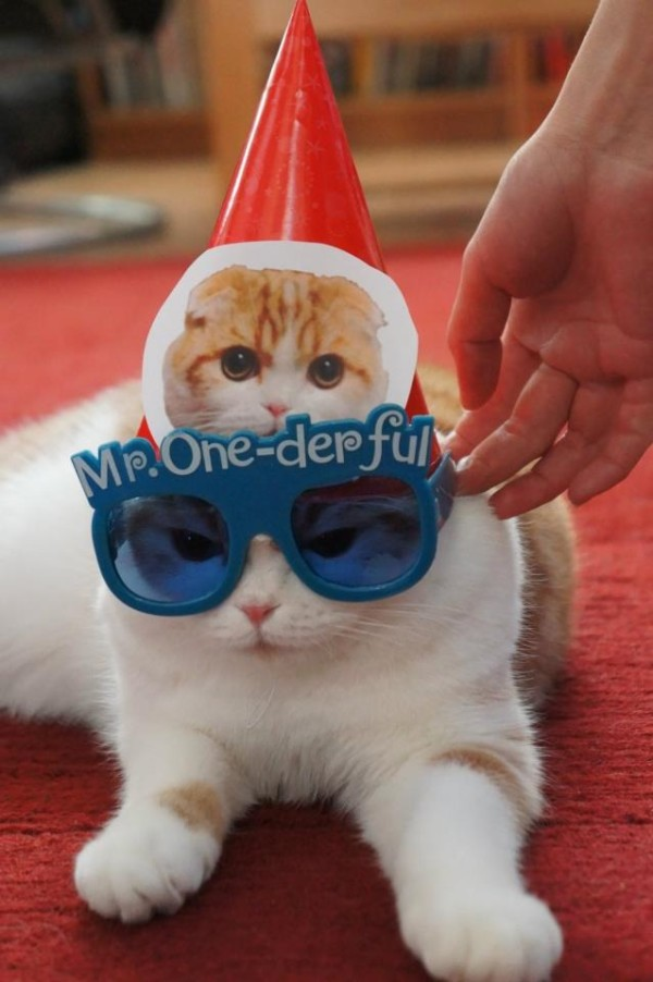 12. This kitty who feels that all of this fuss is wholly unnecessary.