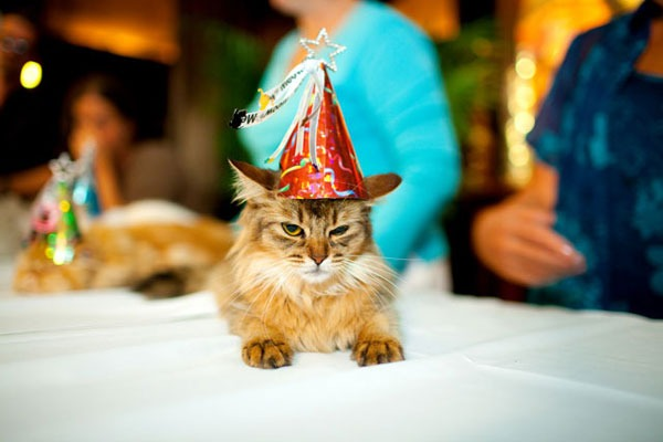 15. This cat whose expression says it all...