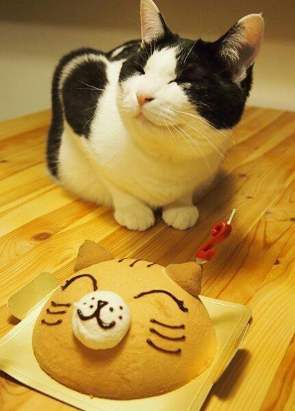 4. This cat who is not amused by you mocking him with pastries.
