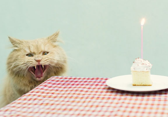 14. This cat who demands that you feed him now and cease all shenanigans.
