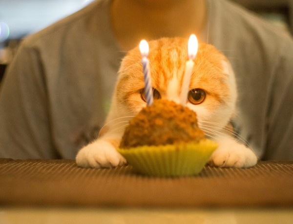 10. This fur baby who is about to pounce on and destroy this cupcake. All systems are a go.