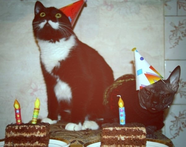 7. These cats who do not find any of this the least bit amusing.