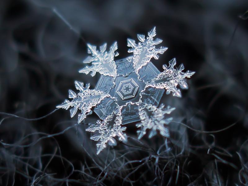 Snowflake (focus stacked version)