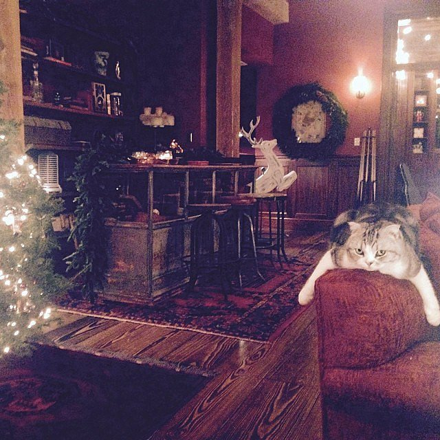 Taylor-said-her-cat-Meredith-so-utterly-BORED-my-Christmas