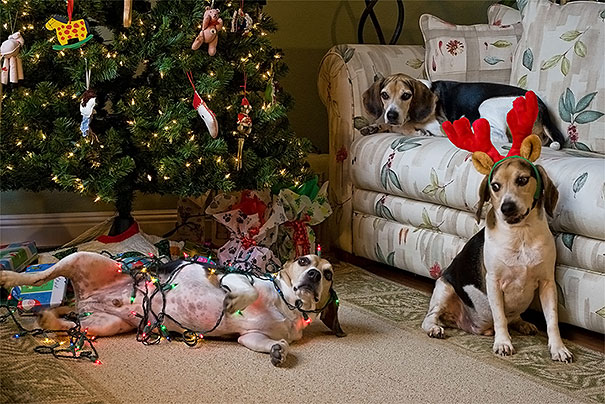 Mom Put Up The Tree And We Helped!