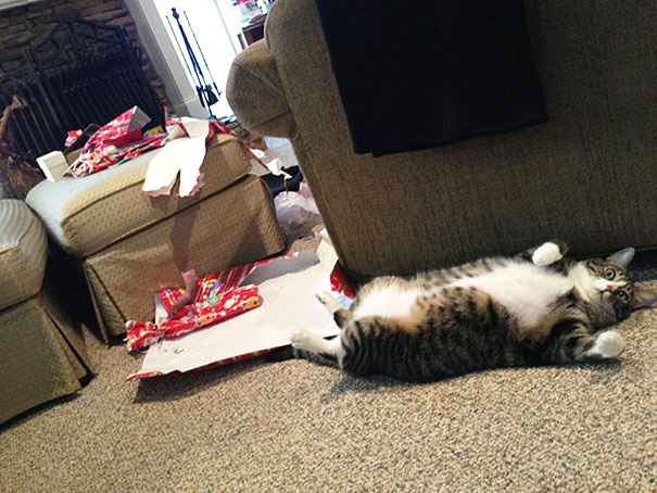 My Cat Ripped Open All The Presents Christmas Morning