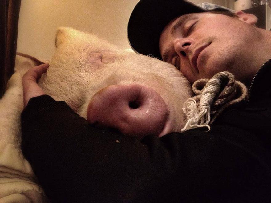 esther-wonder-pig-sanctuary-steve-derek-44