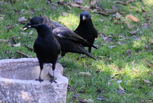 _81210319_birdbath624