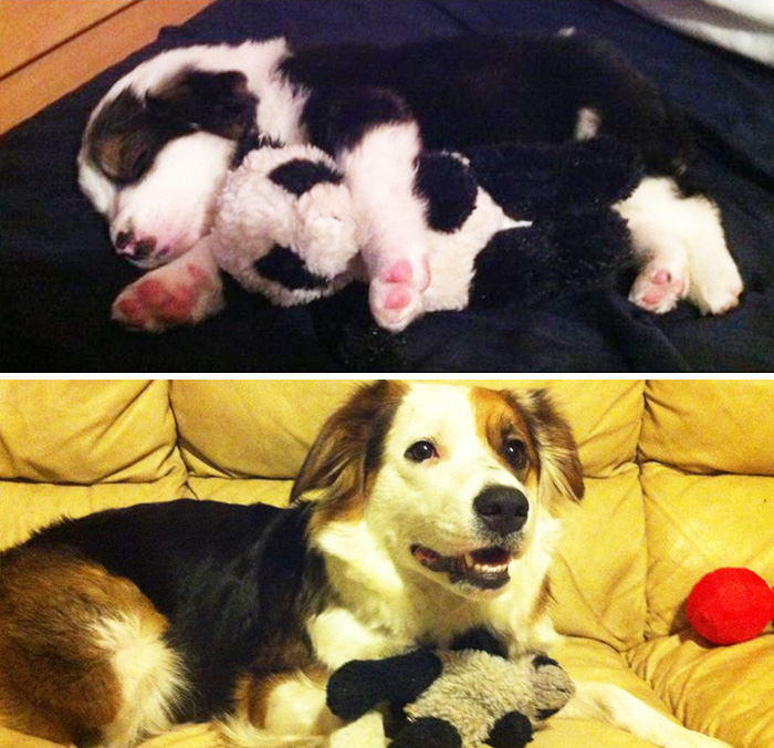 pets-growing-up-with-toys-2__700