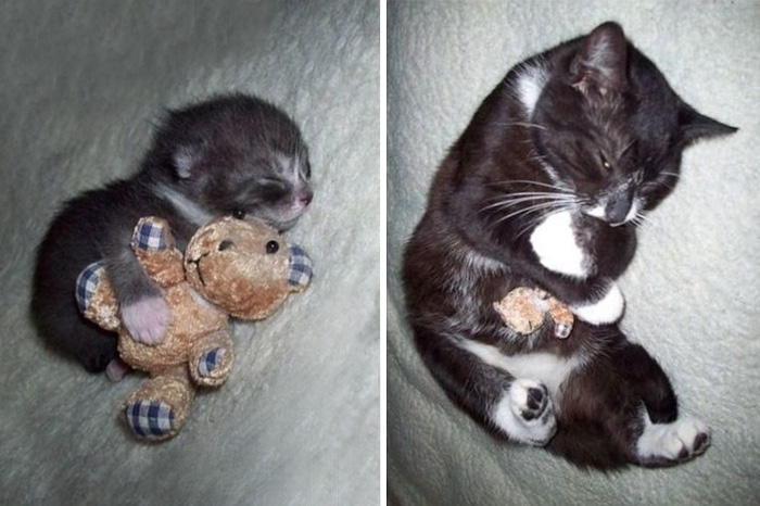 pets-with-toys-cats-dogs-before-and-after-photos-661__700