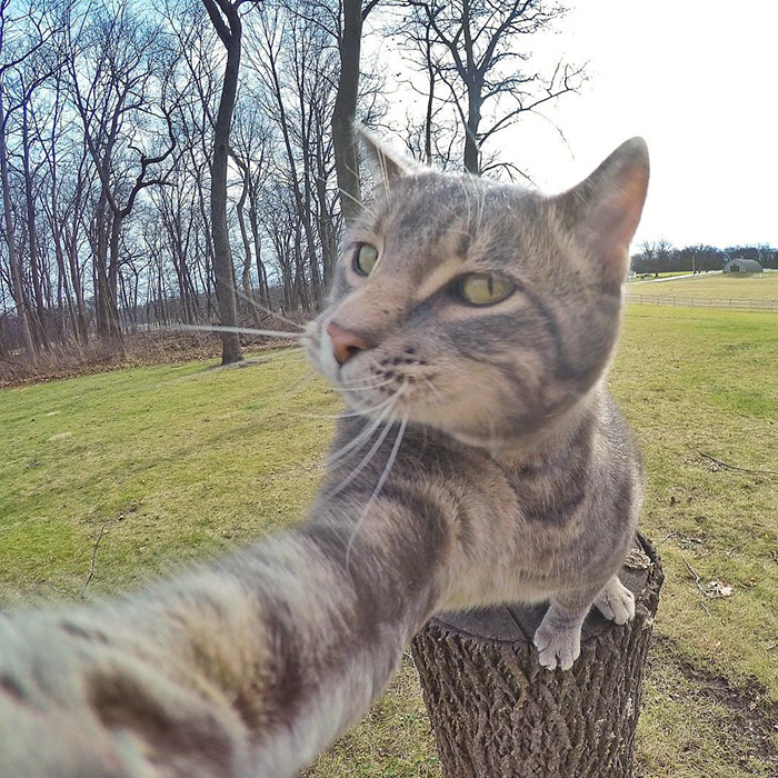 manny-cat-takes-selfies-dogs-gopro-11
