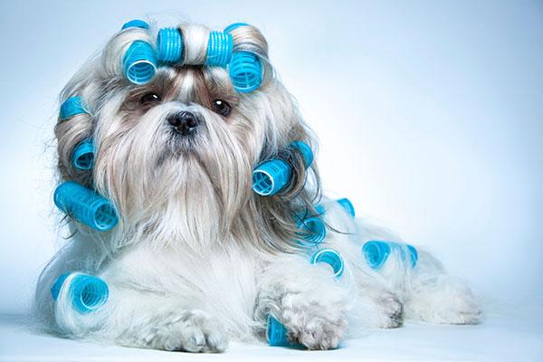 best-vauum-for-pet-hair
