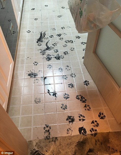 There is a large pool of the black ink in what looks like the family's hallway
