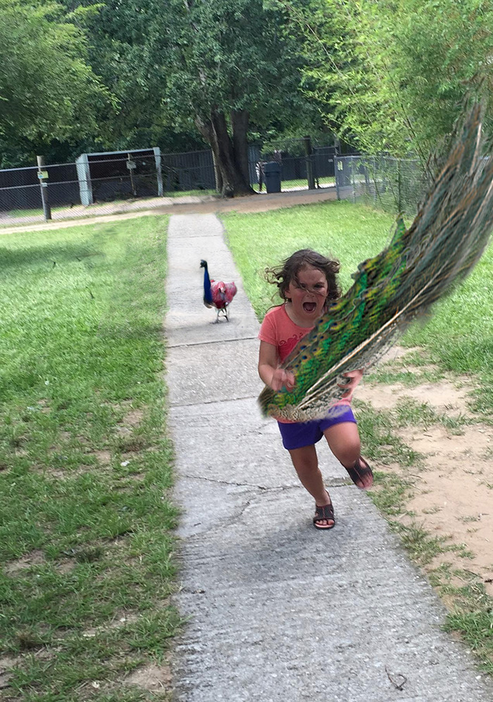 girl-running-from-peacock-photoshop-battle-6-57723b8b49c92-png__700