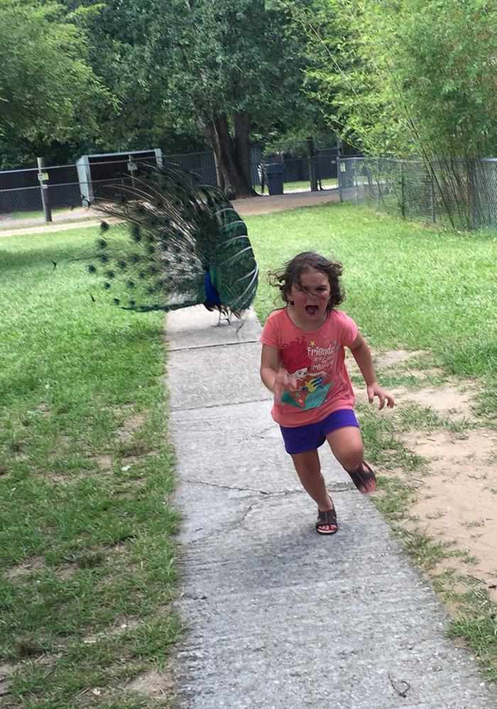 girl-running-from-peacock-photoshop-battle-original