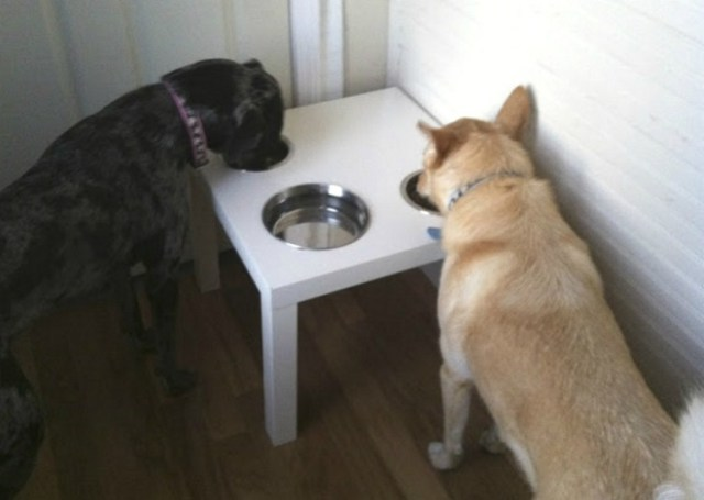 Doggy-Dish-Coffee-Table