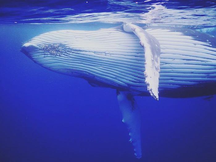 whale-photobomb-diver-will-rosner-australia-9